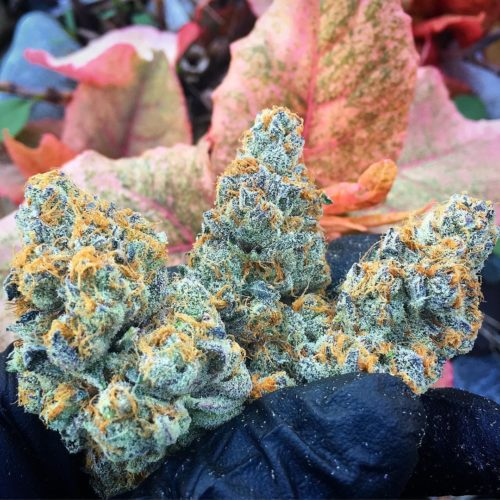 Platinum girls scout cookies